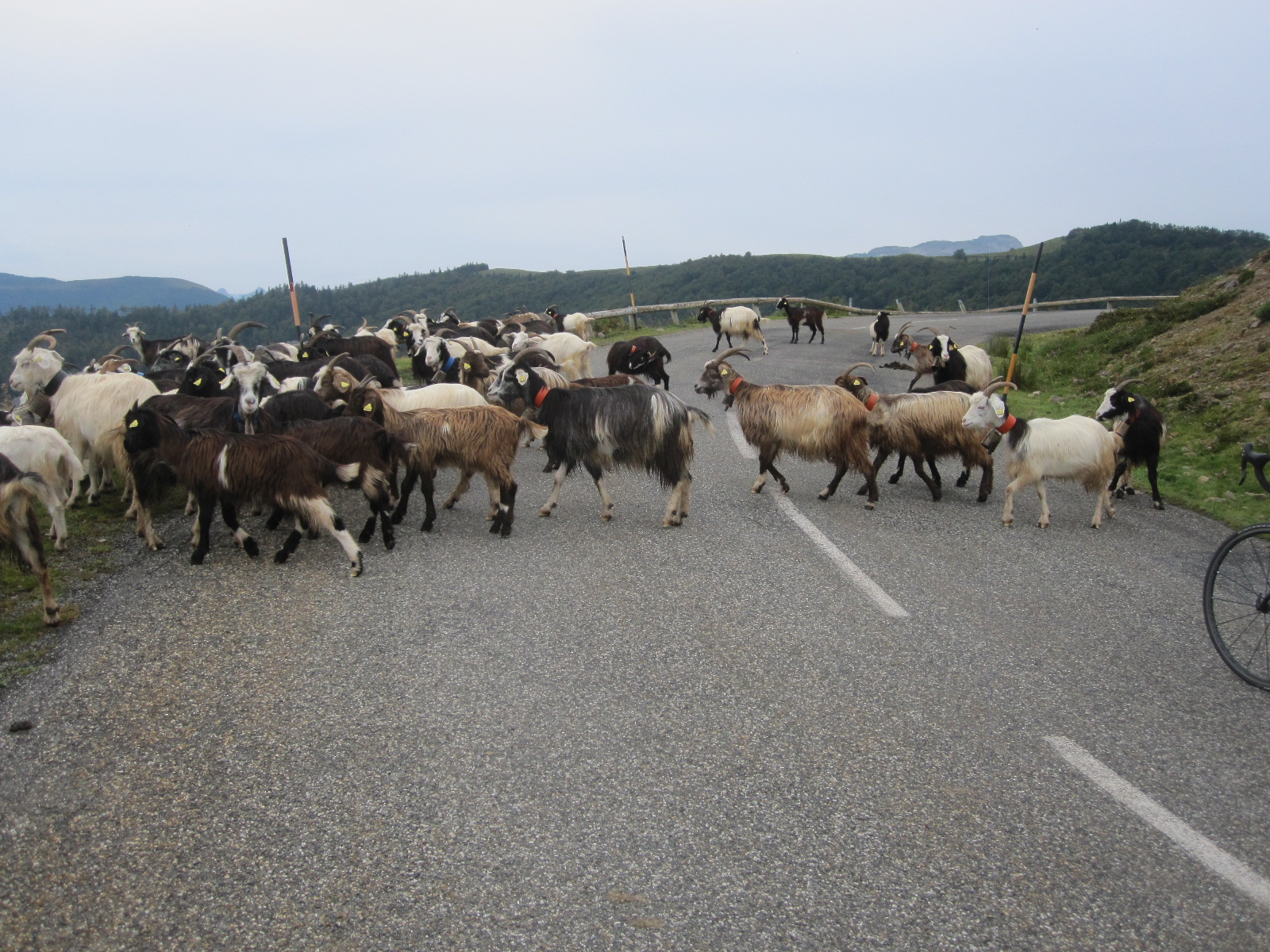Roads are to be shared. Pyrenees roads can be pretty busy, but not usually with vehicles!