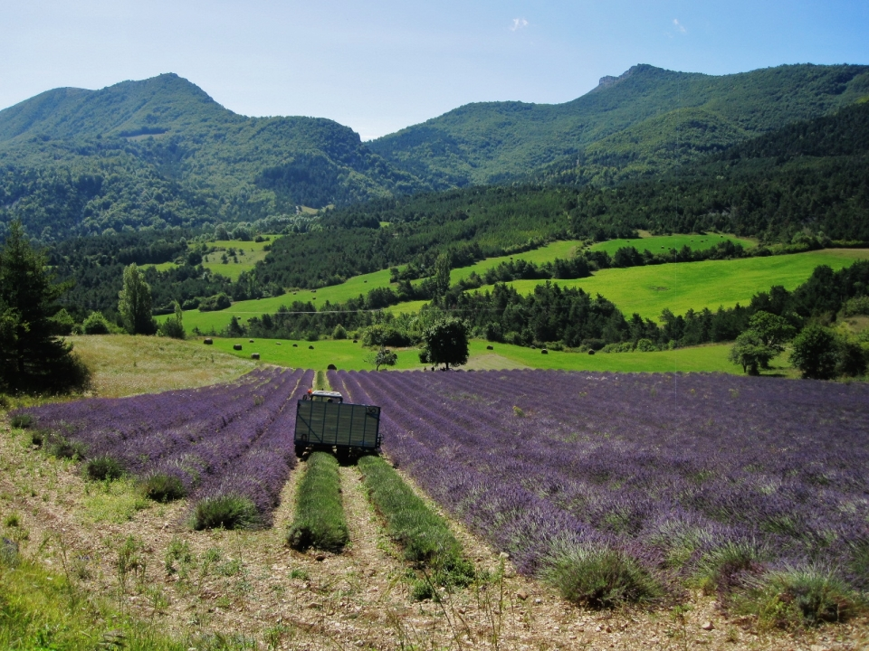 The colour of Provence : as if the sunlight alone wasn't enough to capture our hearts.