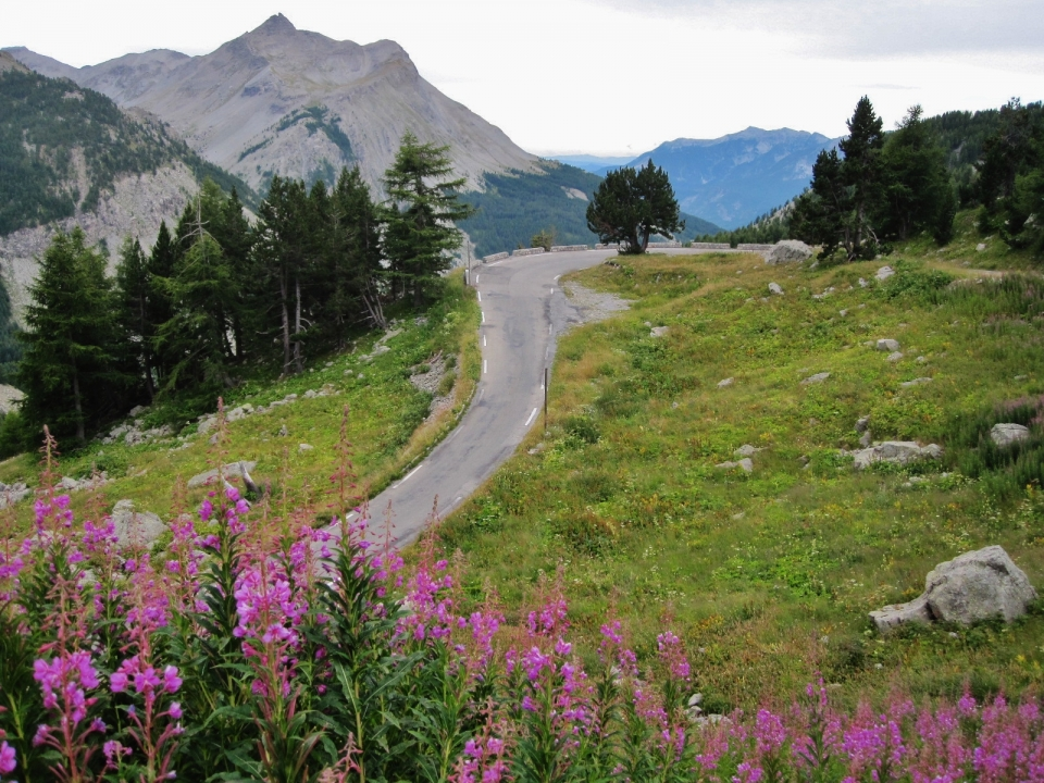 Col de Cayolle. Wild, beautiful. Silence only broken by the whistling of the marmottes.